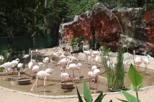 Flamingos at Chiang Mai Zoo