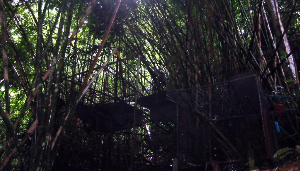 Gibbon Rehabilitation Center Phuket