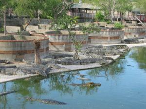 The Samutprakam Crocodile Farm Bangkok