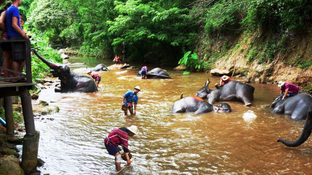 Mae Sa Elephant Camp Chiang Mai